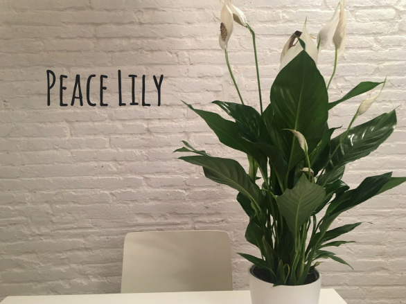 Peace Lily.png